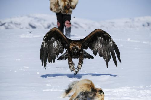 Hunting with eagle Ardakh